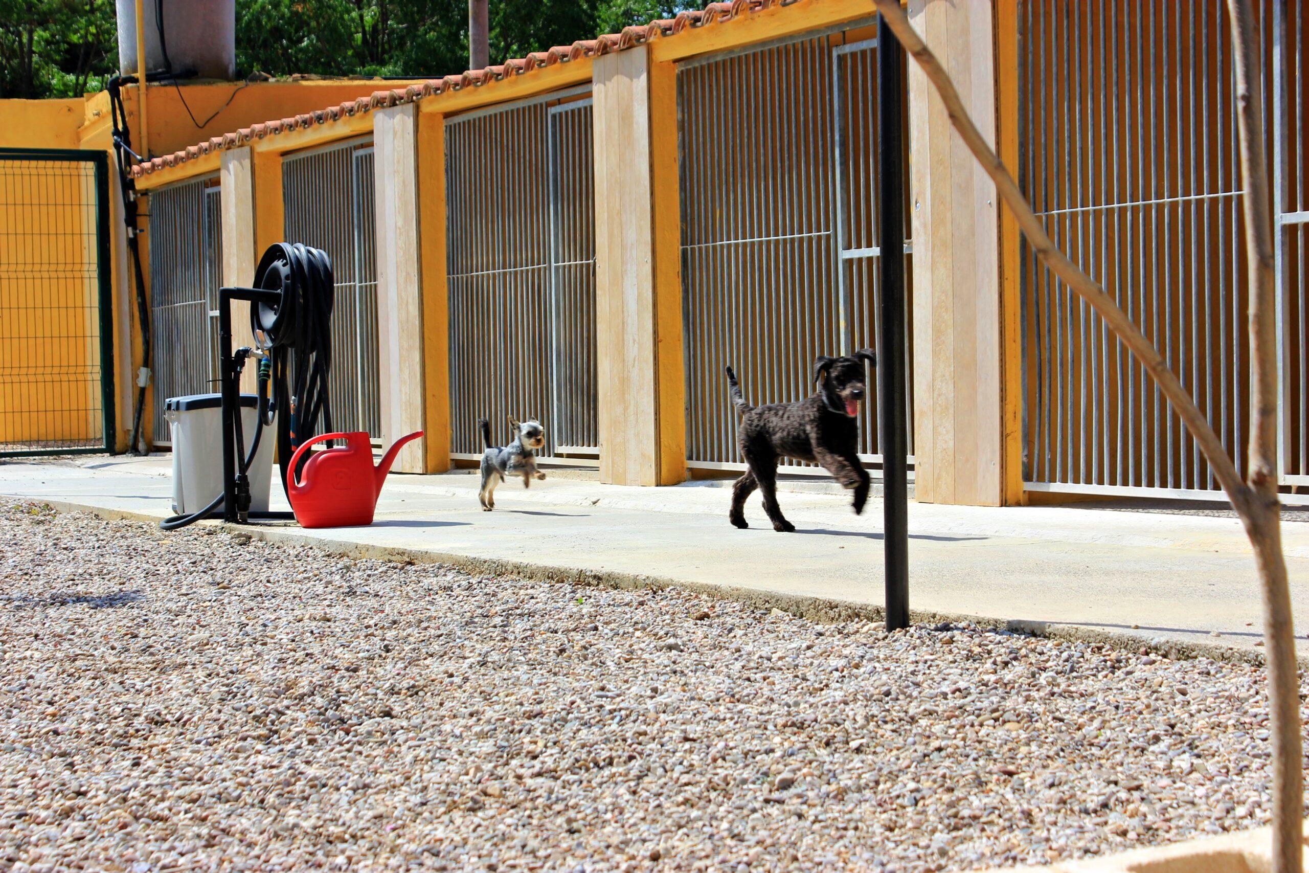 Guardería Canina en Zaragoza ciudad