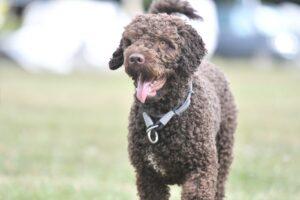 Guarderia para perros zaragoza